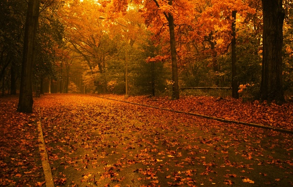 Picture road, autumn, leaves, Trees