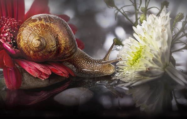 Picture macro, flowers, snail