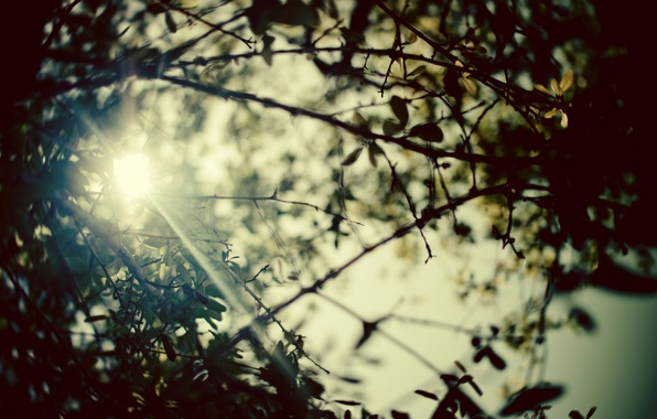 Picture summer, leaves, the sun, rays, trees, branches, nature, photo, background, branch, Wallpaper, pictures, plants, blur, …