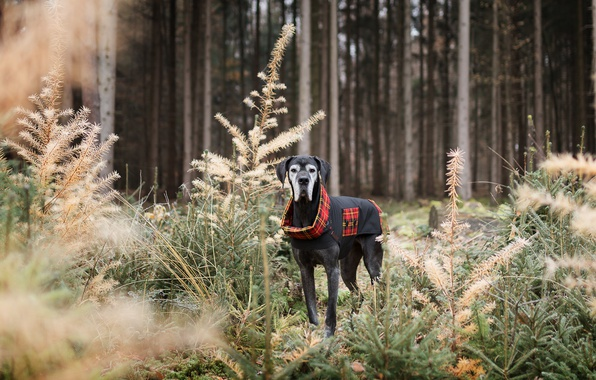 Picture forest, look, dog