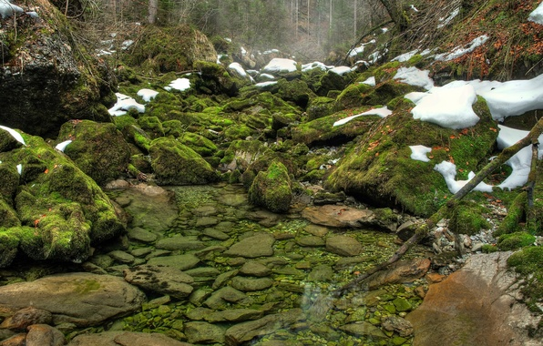 Picture greens, forest, water, snow, river, stones, moss