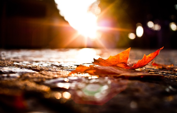 Picture road, autumn, macro, lights, sheet, fallen