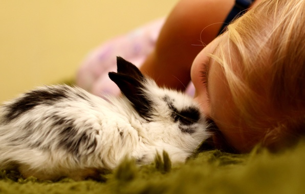 Picture mood, rabbit, girl