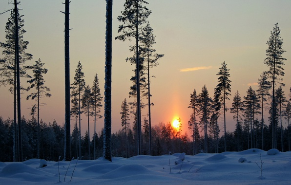 Picture winter, forest, snow, trees, sunset, the evening