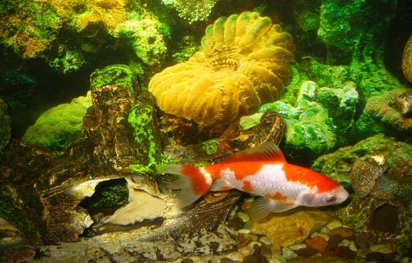 Picture water, fish, aquarium, fish, the bottom, fish