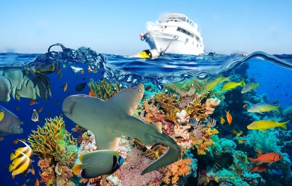 Picture sea, fish, shark, yacht, corals, underwater world