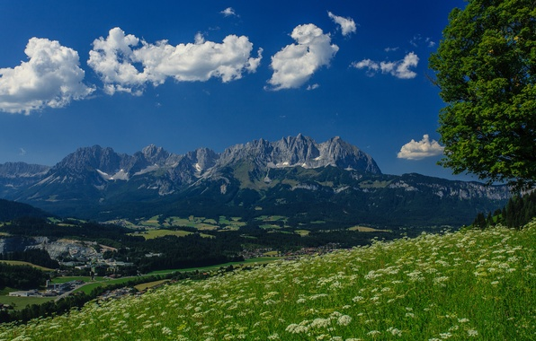 Picture mountains, tree, Austria, Alps, meadow, panorama, Austria, Alps, mountain Wilder Kaiser, Wilder Kaiser