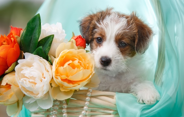 Picture flowers, basket, necklace, puppy, fabric, Jack Russell Terrier