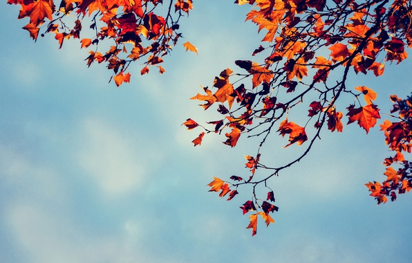 Picture autumn, the sky, leaves, branches, tree