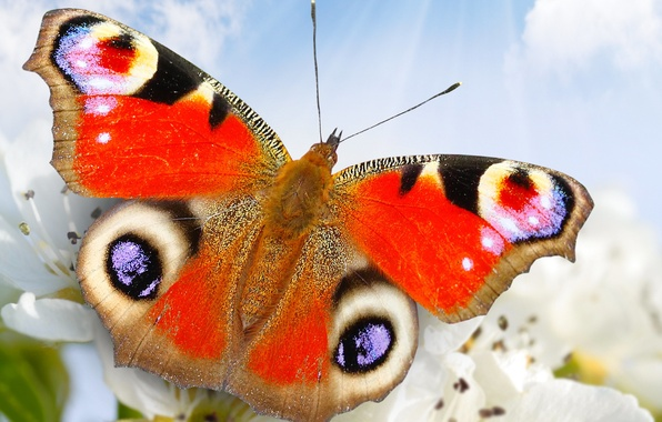 Picture the sky, flowers, nature, butterfly, closeup
