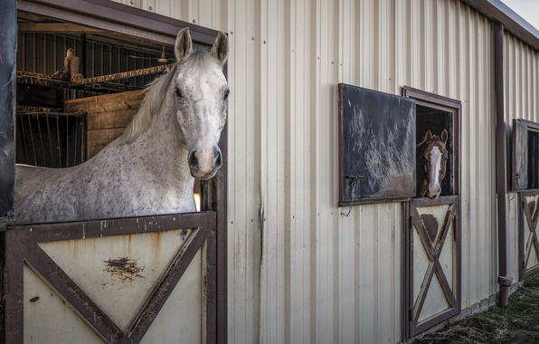 Picture horse, horse, stallion, stable