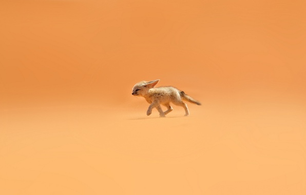 Picture sand, orange, the wind, desert, Fox, ears, Fenech