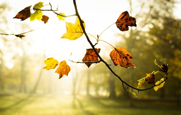 Picture autumn, leaves, fog, branch, morning