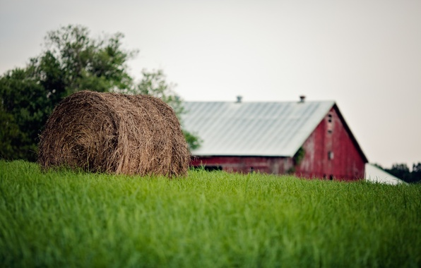 Picture summer, grass, bale, straw, farm