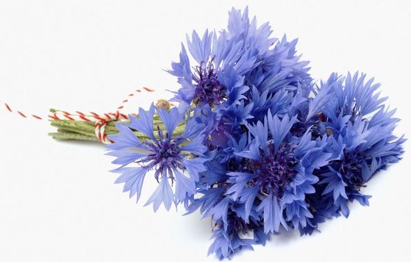 Picture flower, blue, blue, bouquet, white background, cornflower, cornflowers, bluet, cornflower, cenraurea