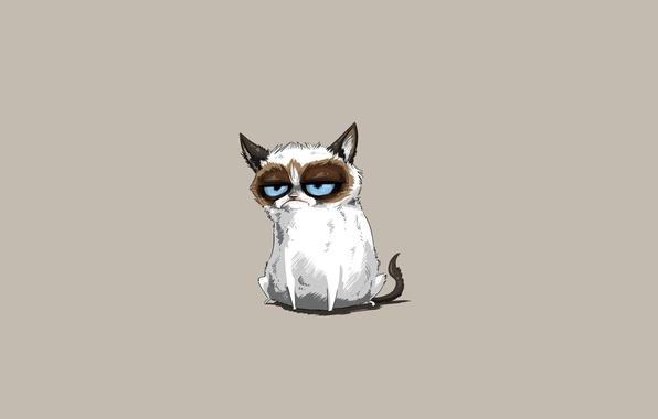 Picture cat, cat, minimalism, Tartar Sauce, Grumpy Cat, Tardar Sauce, Grumpy Cat