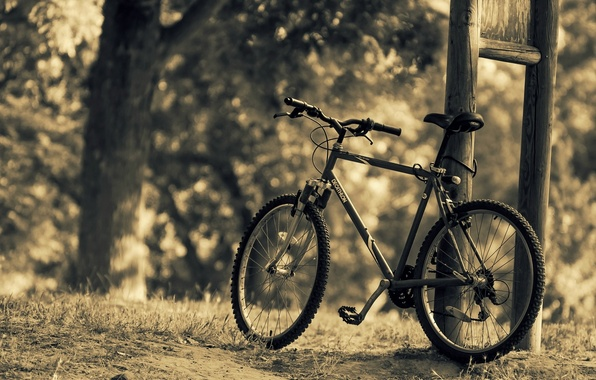 Picture leaves, trees, nature, bike, background, tree, widescreen, Wallpaper, sport, blur, wallpaper, bicycle, different, nature, widescreen, …