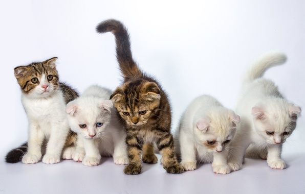 Picture cat, cats, kittens, white background