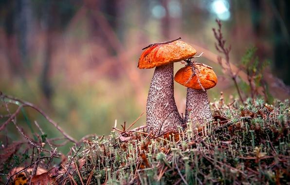 Photo wallpaper forest, boletus, mushrooms, autumn