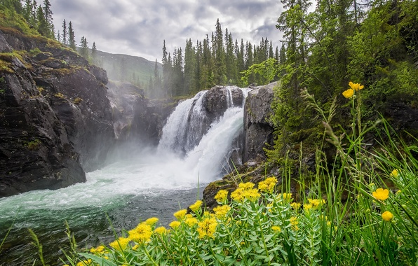 Picture forest, clouds, trees, flowers, mountains, river, stones, rocks, waterfall, moss, yellow