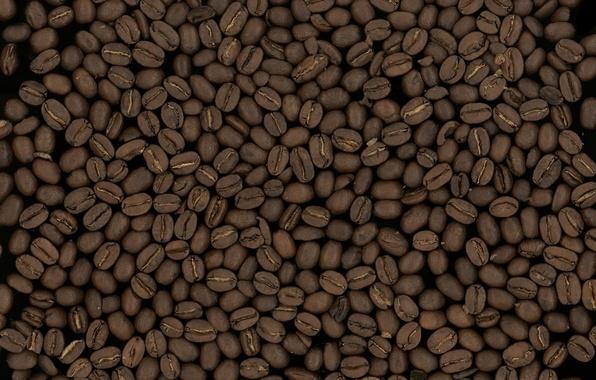 Picture macro, background, grain, coffee, texture, grain