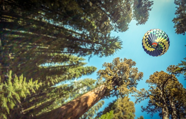 Picture forest, trees, view, ball, air, ballooning, view, photo, photographer, Andrés Nieto Porras