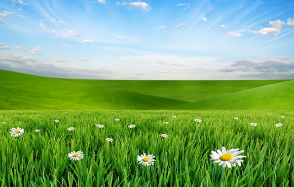 Picture the sky, clouds, landscape, flowers, nature, chamomile, meadow, grass, weed, sky, landscape, nature, flowers, clouds, ...