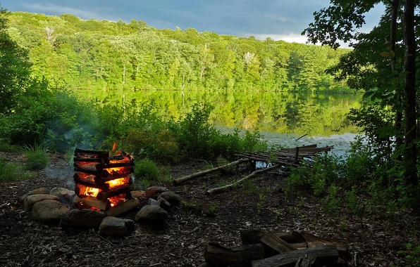 Picture forest, nature, lake, shore, the fire