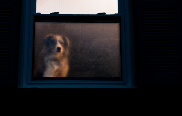 Picture house, devotion, dog, window