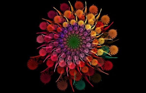 Picture flower, round, rainbow, bouquet, spiral, petals
