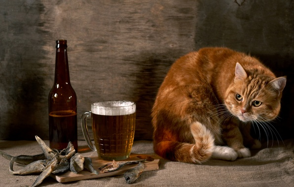 Picture cat, wall, bottle, beer, fish, red, burlap, suspicious