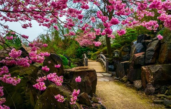 Picture flowers, stones, tree, Sakura, the bridge, Japanese garden