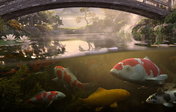 Picture water, fish, bridge, pond, koi, Antonis Fylladitis, koi