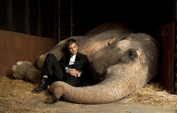 Picture actor, vampire, Twilight, Male, Robert Pattinson, Water for elephants, the elephant, Edward Cullen