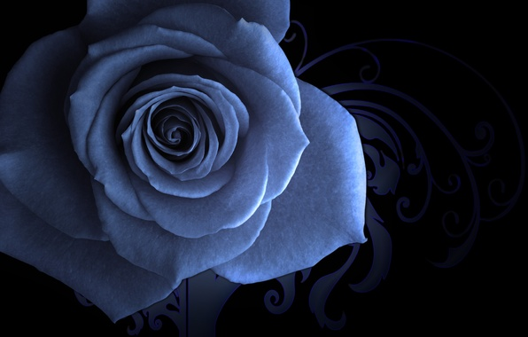 Picture saver, blue rose, patterned background