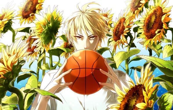 Picture look, sunflowers, the ball, guy, Kuroko From Basket, Kuroko's basketball, Ryouta, solar flare, Kise, Kaijou