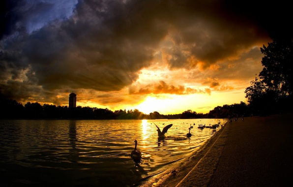 Picture The sun, Water, House, Rays, Swans