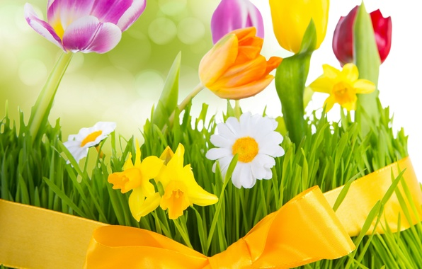 Picture grass, flowers, chamomile, spring, colorful, meadow, tulips, bow, flowering, fresh, flowers, tulips, spring