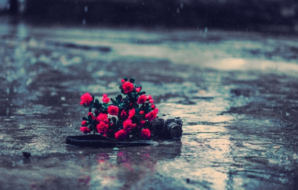 Picture asphalt, water, flowers, background, rain, earth, Wallpaper, mood, roses, the camera, red