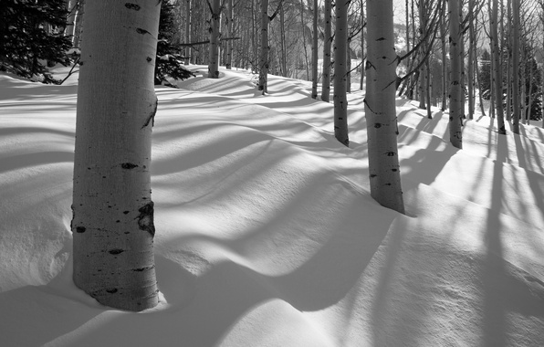 Picture winter, forest, snow, trees, grove, aspen
