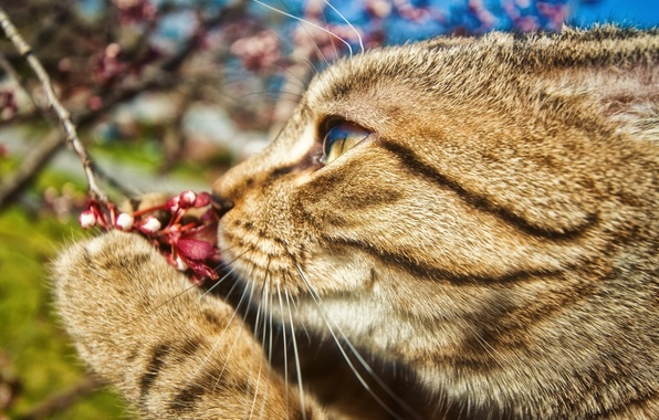 Picture flower, cat, mustache, paw, branch