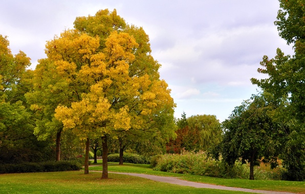 Picture trees, Park, Autumn, alley