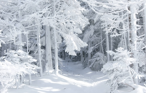 Picture winter, forest, snow, nature, tale