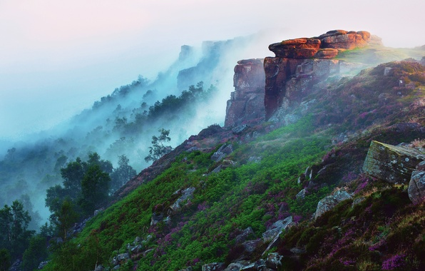 Picture forest, grass, light, flowers, mountains, fog, stones, morning, slope