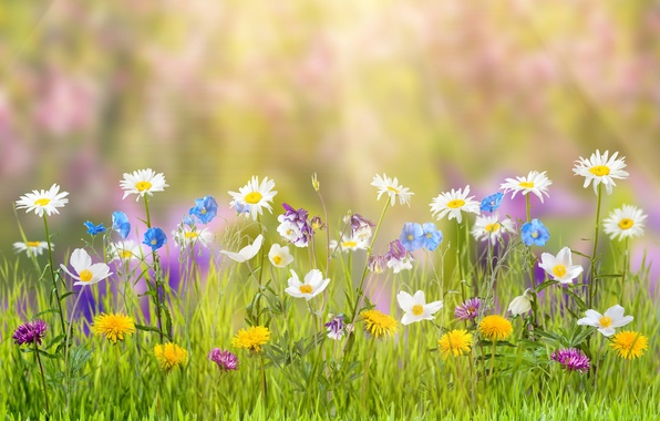 Picture summer, grass, flowers, nature, glare, chamomile, dandelions, the rays of the sun, bokeh, cornflowers, buttercups