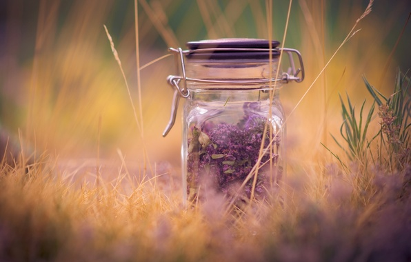 Picture purple, grass, macro, background, widescreen, Wallpaper, mood, plant, blur, Bank, wallpaper, widescreen, background, macro, lavender, …