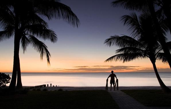 Picture People, Horizon, Palm trees, Silhouette, Landscape