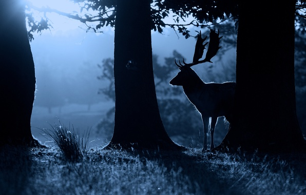 Picture night, nature, animal, deer, silhouette, nature
