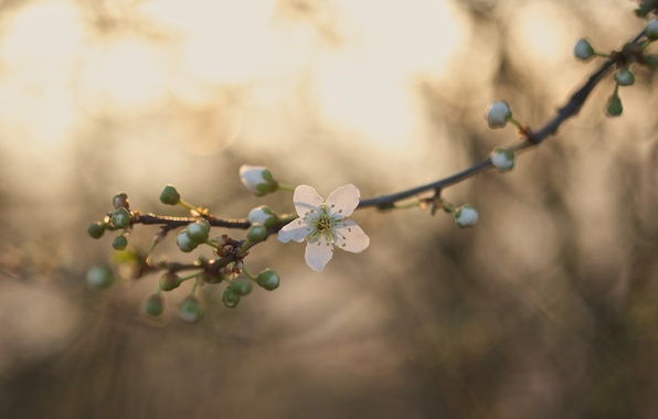 Picture flowers, branch, stem, buds