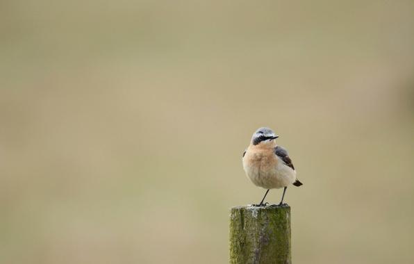 Picture background, bird, little, Kamenka